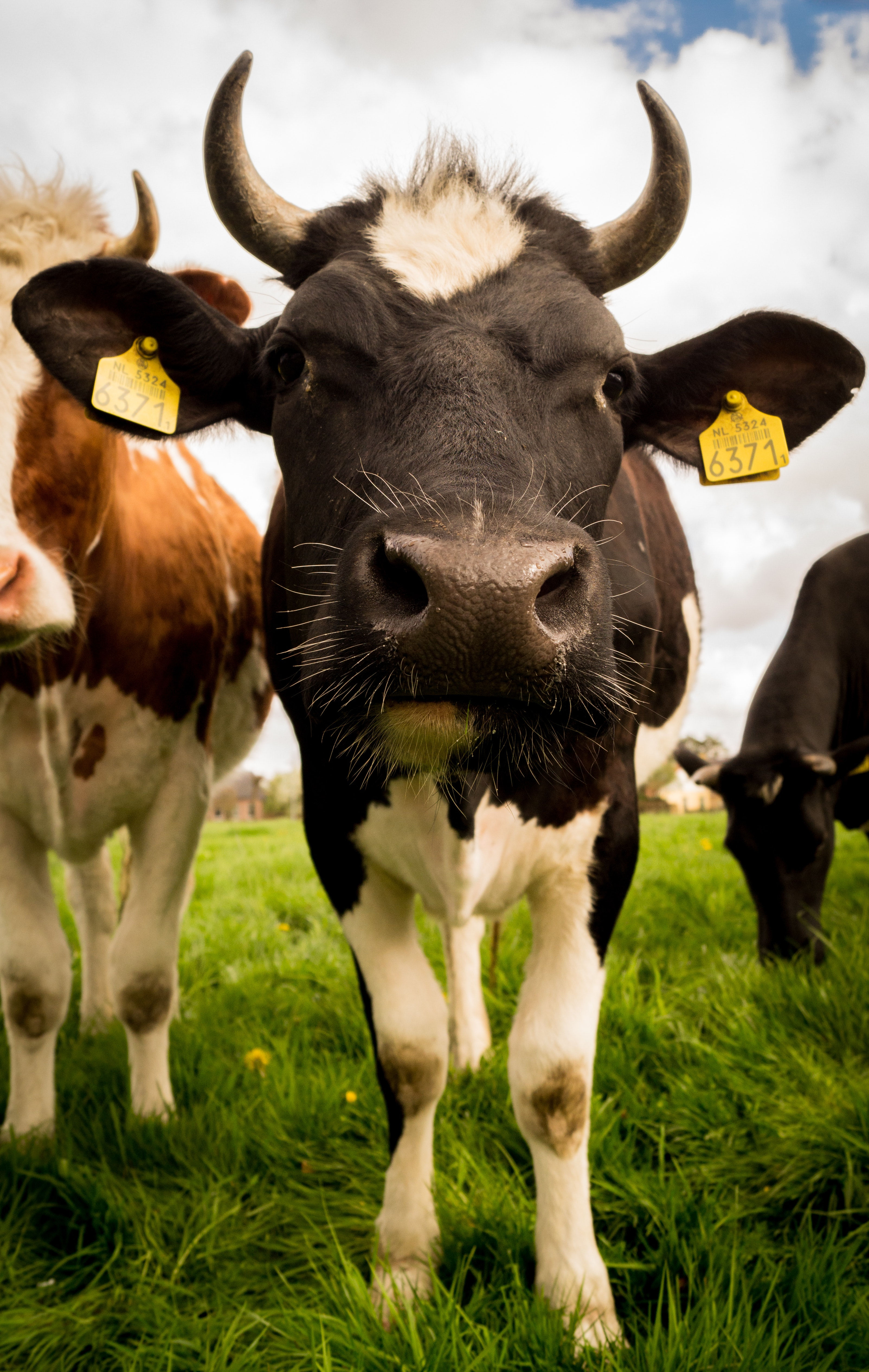 bétail qui sommes nous