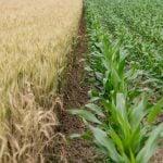 agriculture-assurance-perte-récolte